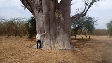 Photo of Fra Aloe vera til Baobab: Jesper henter helende planter til danskerne