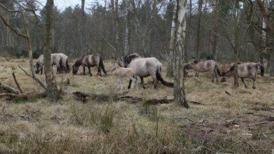 Photo of Køb af dansk skovcertifikat – hvad går dine penge til? Nyhed    •   Nov 27, 2018 14:22 CET