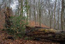 Photo of Tag med i Kollund skov, der har været her siden istiden