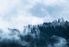 Photo of Manglende fokus på skov og biodiversitet i klimaforhandlingerne
