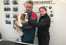 Photo of 1000 danske kæledyr har fået et bedre liv af Frynseklinikken: Hunden Ciao blev patient nr. 1000