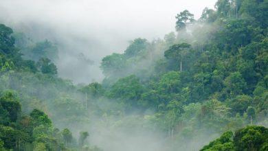 Photo of Praktikplads i efteråret 2019: Vær med til at sætte skov og klima på dagsordenen